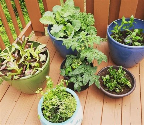 apartment container gardening 67 best images about balconies patios on