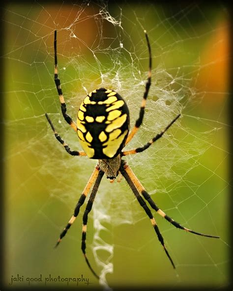 Garden Spider Mn 1000 Images About Homes For The Toads On