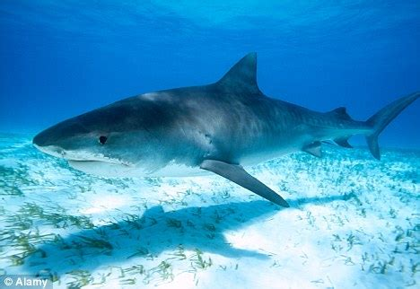 are sharks color blind skin and colour blind sharks are less