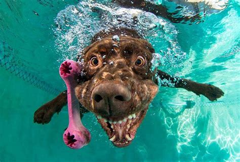 dogs underwater 15 hilarious photos of dogs trying to fetch a underwater 7 lol