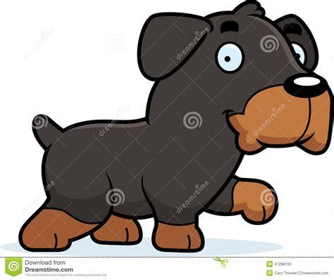 rottweiler walking rottweiler walking stock vector image 47296133