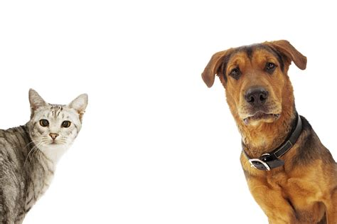 dogs and cats remodelaholic 8 best products for dogs and cats