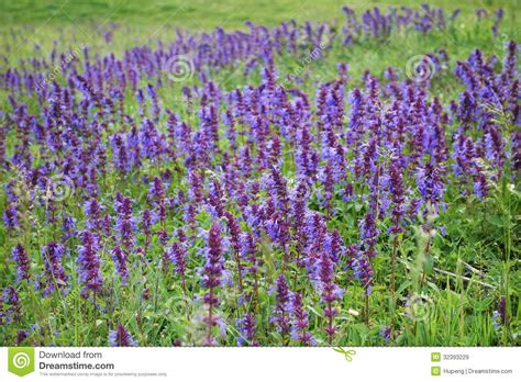 wild purple flowers stock image image of blossoming