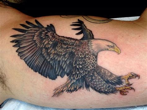 hawk tattoo hawk tattoos designs ideas and meaning tattoos for you