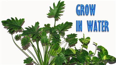 grow ls for indoor plants interior plants names psoriasisguru com