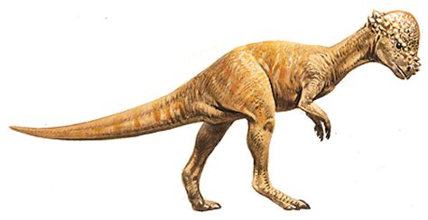 pachycephalosaurus | the everything wikia | fandom powered