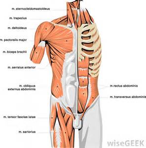 Shoulder Pain Incline Bench How Do I Fix A Saggy Chest With Pictures