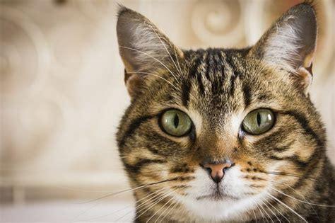 How Long Do Tabby Cats Live?   Cuteness.com