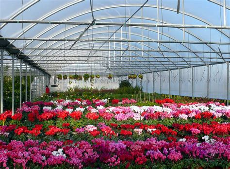 coltivare fiori in serra ercolano il mercato dei fiori si rif 224 il look con un
