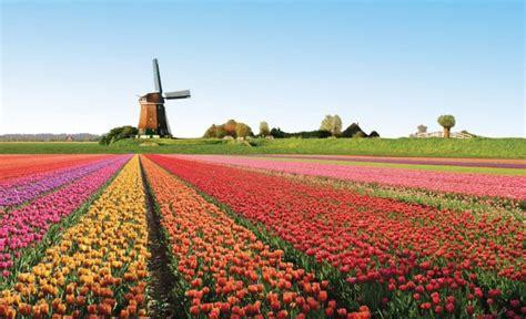 di commercio italiana in olanda l olanda dei tulipani e delle biciclette