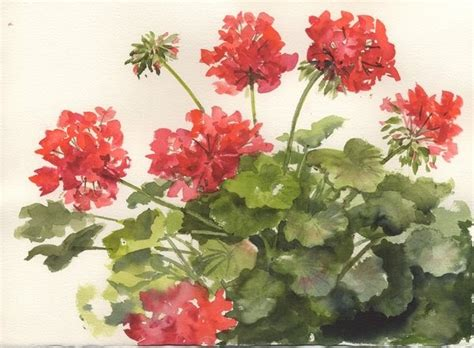 susie s watercolor splashes splatters painting geraniums march 2009