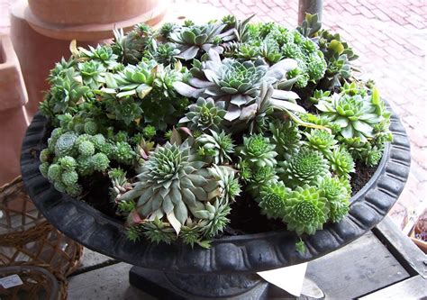 martha moments succulents in containers home interior