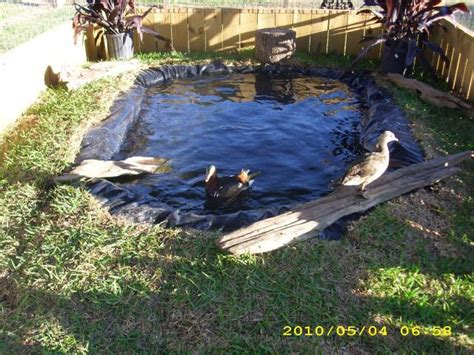 backyard duck ponds duck pond pool pictures page 5