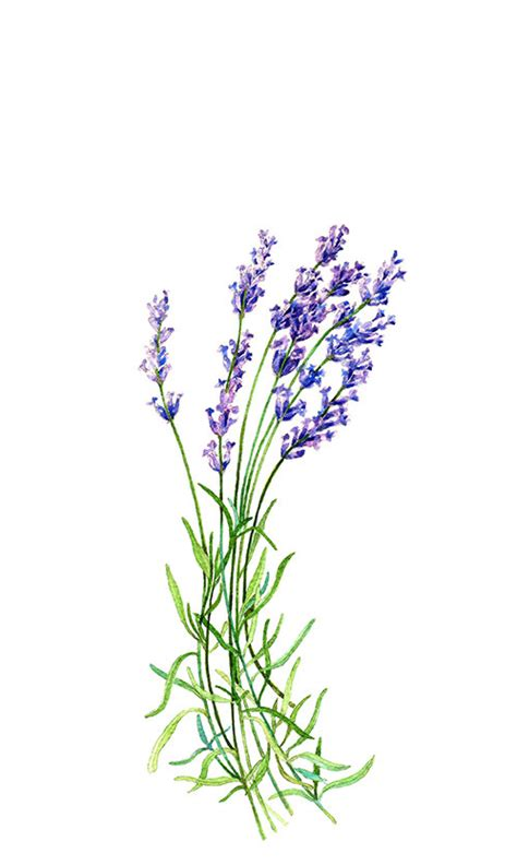 sticker by number beautiful botanicals 12 floral designs to sticker with 12 mindful exercises books lavender botanical print illustration watercolor garden summer