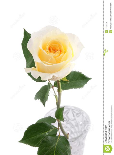 Yellow Roses In Vase by Yellow In Vase Stock Photo Image 13346210