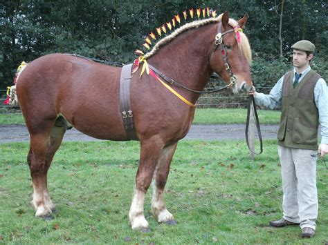 largest breed of 10 rarest breeds nation