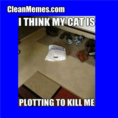 Funny Memes Clean - clean funny cat memes