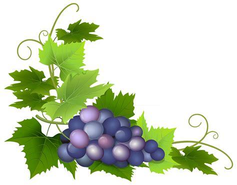grape leaf png clipart best