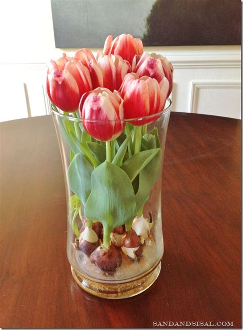 how to grow tulip bulbs in a vase beesdiy com