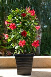 low maintenance gardens benefit from the magic of beautiful container plants fresh design pedia