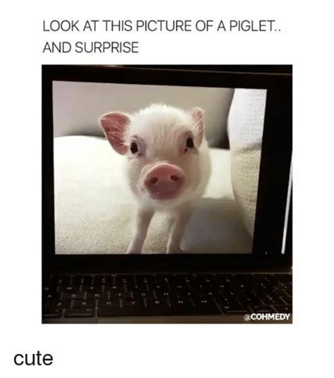 Piglet Meme - 25 best memes about piglet piglet memes