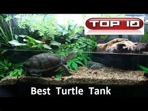tartaruga d acqua alimentazione alimentazione tartaruga d acqua clinica veterinaria b