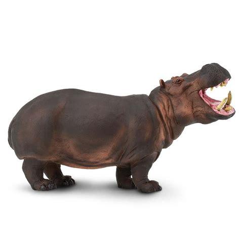 si鑒e social hippopotamus hippopotamus safari ltd 174