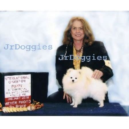 pomeranian breeders pittsburgh pa pomeranian breeders in pennsylvania freedoglistings breeds picture
