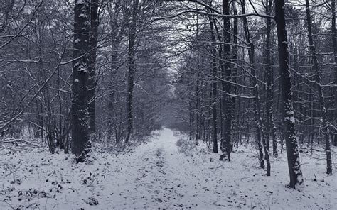 grey jungle wallpaper 4 snowy grey forest firs black white path hd wallpaper