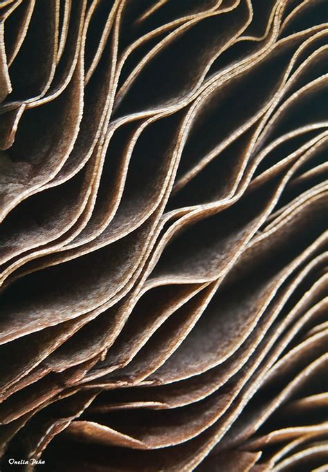 pattern seen in nature 63 best rocks images on pinterest beautiful places