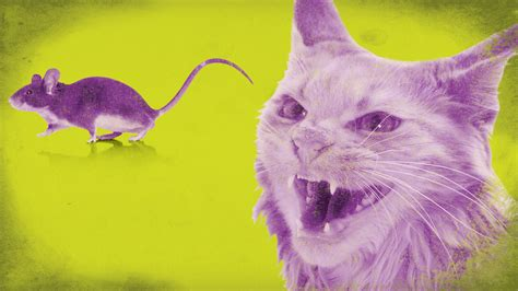 mousy cats and sheepish coyotes the science of animal personalities books cat urine does some strange things to baby mice vocativ