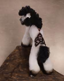 poodle haircuts pictures strange poodle haircuts 12 pics curious funny photos