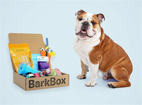 barkbox for dogs quot barkbox quot filled with treats toys funcheap