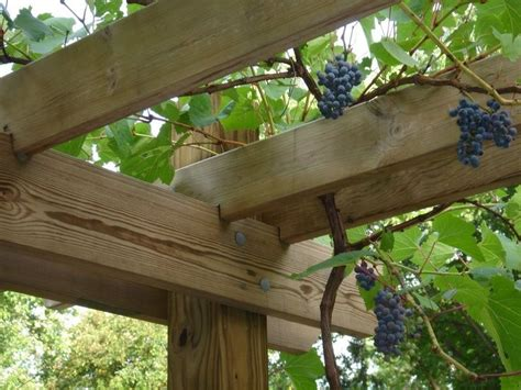 Garden Arch For Grapes 18 Best Images About Garden Planning On
