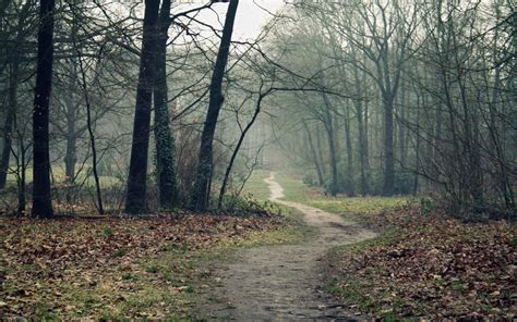 in the panchina a path in the woods in autumn wallpapers a path in the