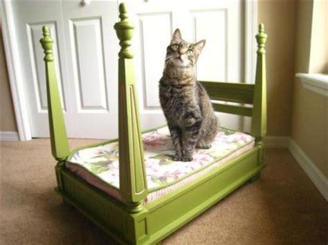 gatto a letto come scegliere il letto giusto per il nostro gatto tutto