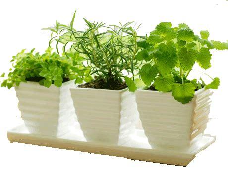 Best Windowsill Herbs Ten Herbs For Indoor Growing Dr Akilah Celestial