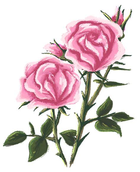 rose tegning maleri gratis billeder pa pixabay