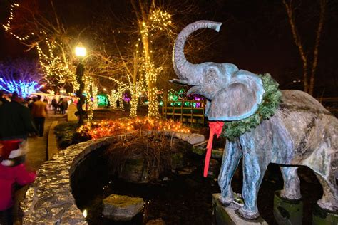 saint louis zoo christmas lights st louis zoo s wild lights christmas display