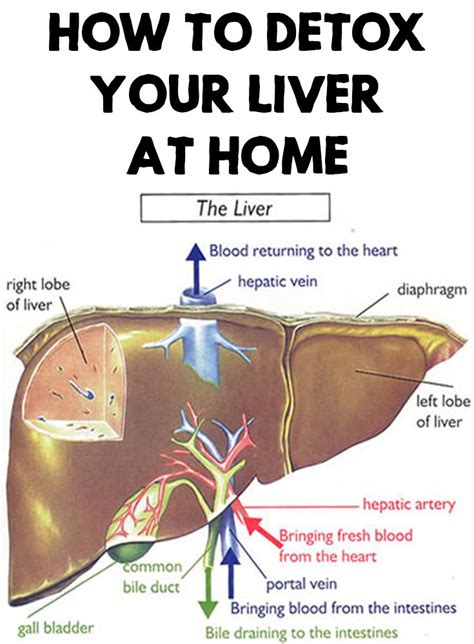 How To Detox From At Home how to detox your liver at home detox essentials and bodies