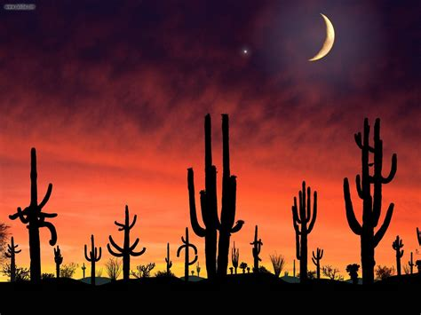 Wild West Home Decor by Nature Saguaro National Park Arizona Picture Nr 23301