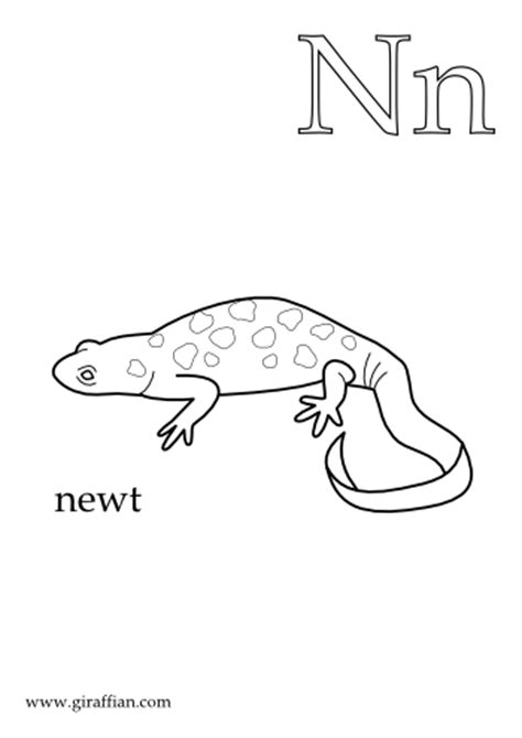 newts colouring pages