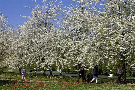 Britzer Garten Tulpenschau by Tulpenschau Quot Tulipan Quot Berlin Av Berichte Fotos Und