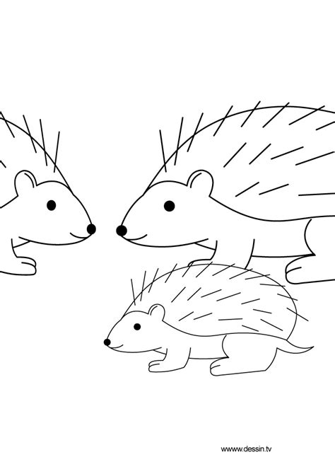 coloring page of a hedgehog free coloring pages of hedgehog