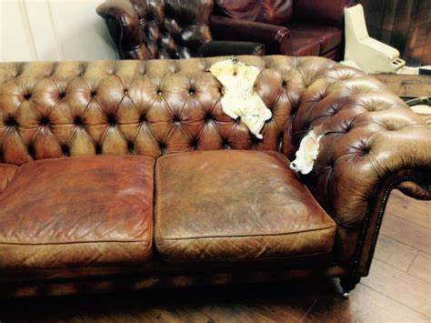 fleas in leather couch latest the leather surgeons