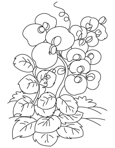 Flower Syari Purple sweet pea coloring pages coloring page