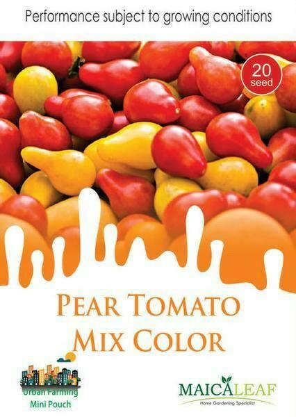 Maica Leaf Buah Pear Golden Pear Benih Tanaman 10 Benih benih tomat pear mix colour maica leaf jualbenihmurah