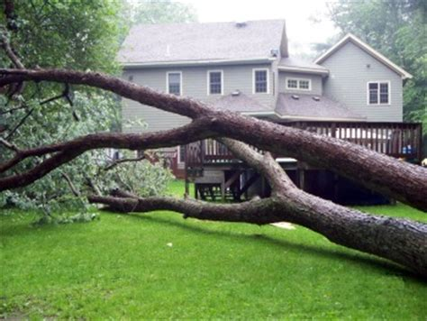 insurance tree falls neighbors house if a tree falls over your property line and no one is around to hear it who pays