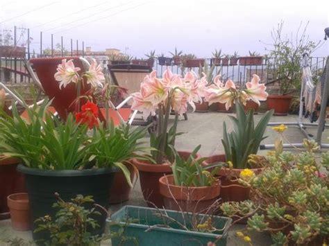 i fiori di napoli b b fiori di napoli bewertungen fotos neapel italien