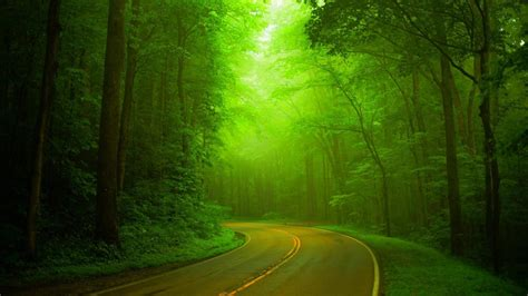imagenes verdes full hd wallpaper bosques naturales bosques verdes caminos